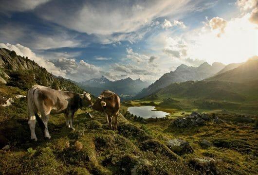 Österreich & Schweiz